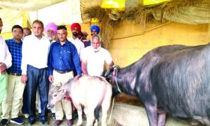 Animal Husbandry, Truth Gaurav, Laboratory ,Time, World