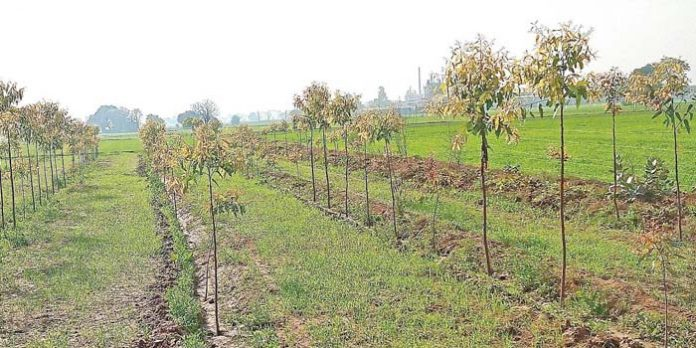 Cultivation of Hybrid